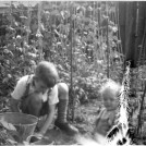 Photo:3.	Peter and Colin Prior  siblings gardening at Torre Walk c. 1947