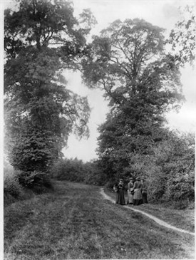 Photo:Berry pickers in Green Wrythe Lane circa 1910
